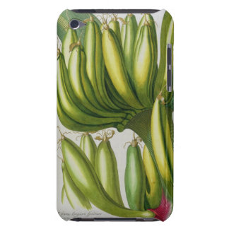Banana, engraved by Johann Jakob Haid (1704-67) pl Barely There iPod Case
