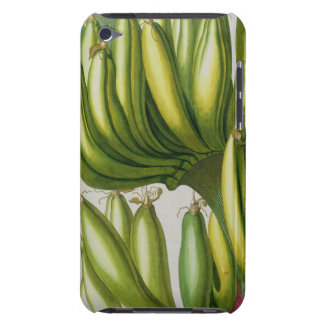 Banana, engraved by Johann Jakob Haid (1704-67) pl iPod Touch Cover