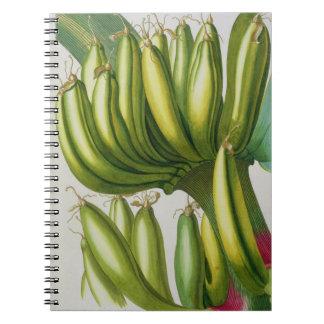 Banana, engraved by Johann Jakob Haid (1704-67) pl Spiral Note Book