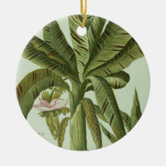 Banana, from J. Weinmann's Phytanthoza Iconographi Christmas Ornament