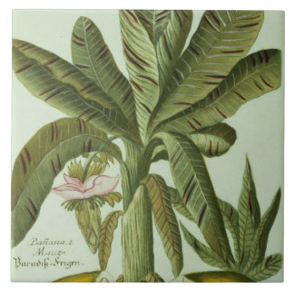 Banana, from J. Weinmann's Phytanthoza Iconographi Tile