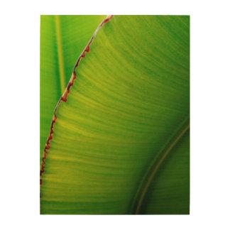 Banana Leaf Abstract Wood Canvas