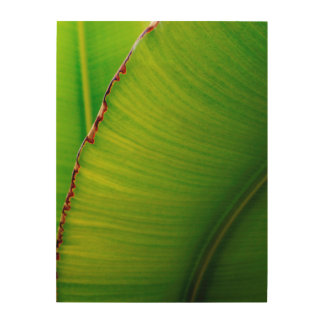 Banana Leaf Abstract Wood Print