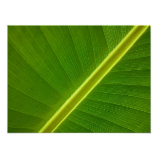 Banana Leaf Macro Poster