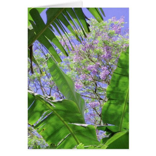 Banana Leaves and Jacaranda Cards
