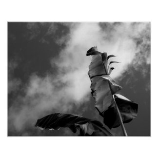 Banana Tree Black and White Portrait Poster