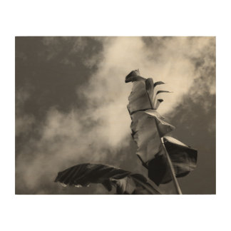 Banana Tree Black and White Wood Canvas