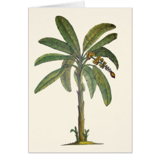 Banana Tree Botanical Card
