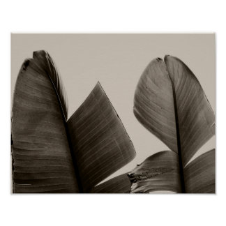 Banana Tree Leaves in Sepia Poster