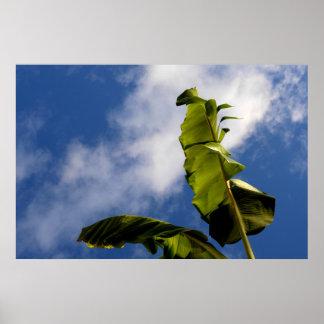 Banana Tree Leaves Poster