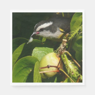 Bananaquit Bird Eating Tropical Nature Photography Disposable Serviette