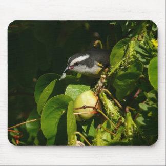 Bananaquit Bird Mousepad