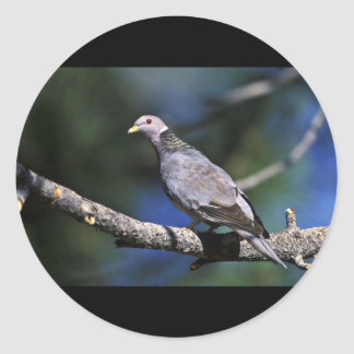 Band-tailed Pigeon Sticker