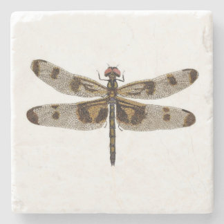 Banded Pennant Dragonfly Coaster Stone Beverage Coaster