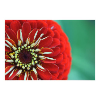Bang-red Photo Print