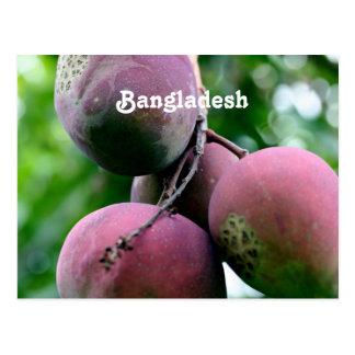 Bangladesh Mango Tree Postcards