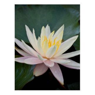 Bangladesh Water Lily Post Cards