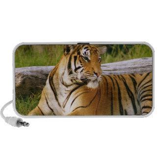 Bangle Tiger Travelling Speaker