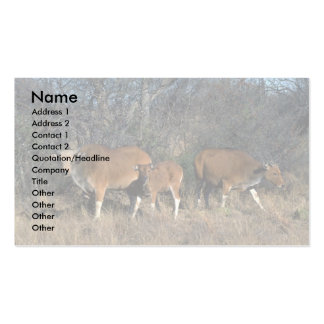 Banteng-adult bull, calf, and adult cow pack of standard business cards
