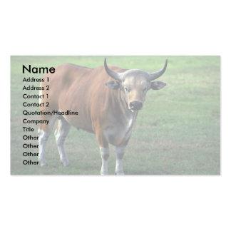 Banteng-adult bull pack of standard business cards