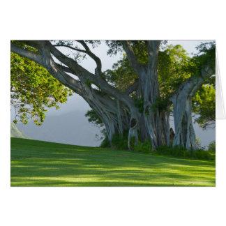 Banyan Tree, Manoa Valley, Honolulu, Hawai'i Card