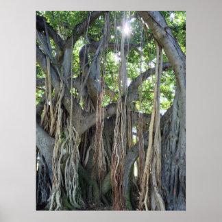 Banyan Tree Posters