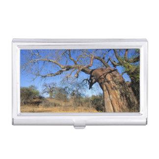 Baobab (Adansonia Digitata), Kruger National Business Card Holder