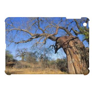 Baobab (Adansonia Digitata), Kruger National Case For The iPad Mini