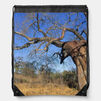 Baobab (Adansonia Digitata), Kruger National Drawstring Bag