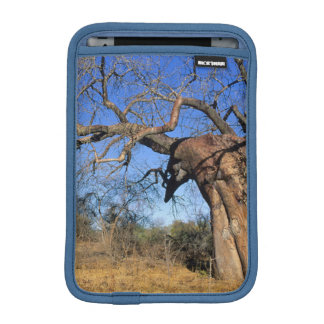 Baobab (Adansonia Digitata), Kruger National iPad Mini Sleeve