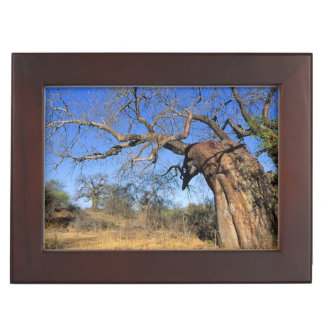 Baobab (Adansonia Digitata), Kruger National Keepsake Box