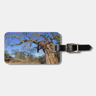 Baobab (Adansonia Digitata), Kruger National Luggage Tag