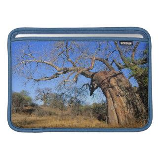 Baobab (Adansonia Digitata), Kruger National MacBook Sleeve