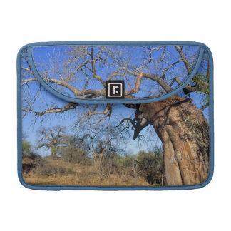 Baobab (Adansonia Digitata), Kruger National Sleeve For MacBook Pro