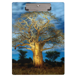 Baobab (Adansonia) Tree Light Up By The Moon Clipboard
