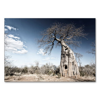 Baobab Tree at Mana Pools National Park, Zimbabwe Table Card