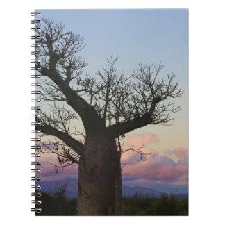 Baobab trees, Berenty, Toliara, Madagascar Notebook