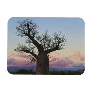 Baobab trees, Berenty, Toliara, Madagascar Rectangular Photo Magnet
