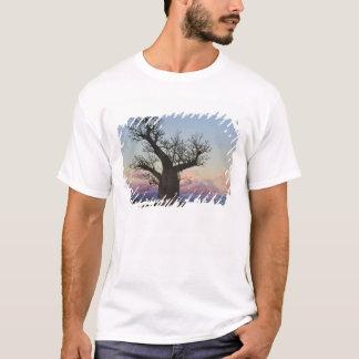 Baobab trees, Berenty, Toliara, Madagascar T-Shirt