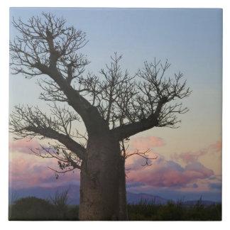 Baobab trees, Berenty, Toliara, Madagascar Large Square Tile