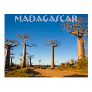 Baobab trees of Madagascar Postcard