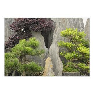 Bao's family garden, Huangshan, China. 2 Photo Print