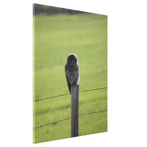 BAOW Barred Owl Gallery Wrapped Canvas