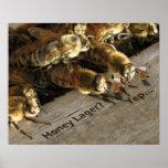 Bar Bees_Honey Lager? Poster