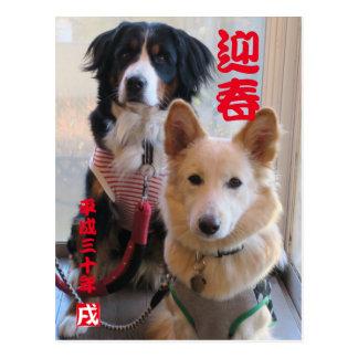 Bar needs mountain dog and wild mixed dog New Postcard