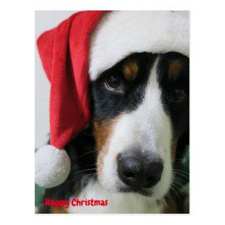 Bar needs mountain dog Christmas card