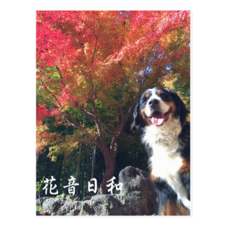 Bar needs mountain dog flower sound day harmony postcard