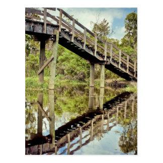 Barataria Swamp Reflections Postcard