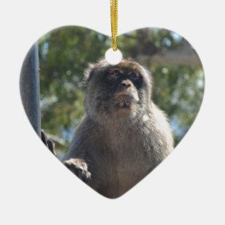 Barbary Ape Christmas Ornament