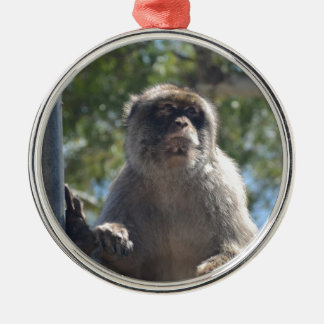 Barbary Ape Silver-Colored Round Decoration